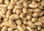 Sprzedam ziemniaki, odmiany jadalne
