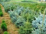 Krzewy ozdobne - ponad 200 odmian !