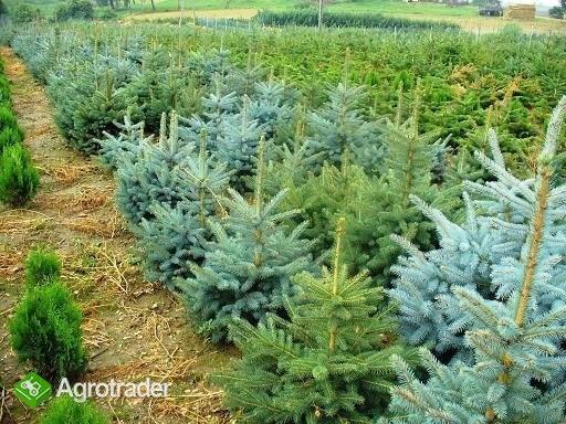 Krzewy ozdobne - ponad 280 odmian !