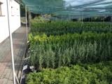 Tuje żywopłotowe i ponad 280 odmian krzewów.