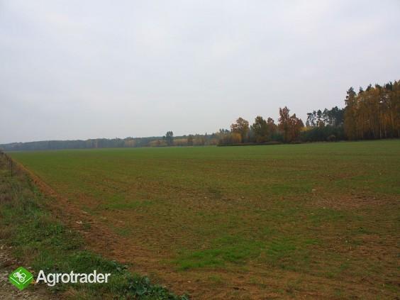 30 ha, Biskupice koło Sycowa, dolnośląskie - zdjęcie 4