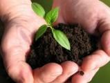 Właściwe odżywianie roślin!