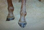 sprzedam pellet Houtkorrels als ondergrond in de paardenstal