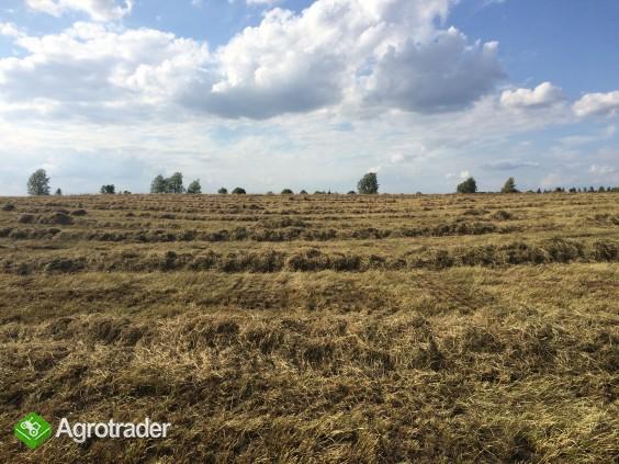 Siano - po desykacji traw nasiennych - zdjęcie 2