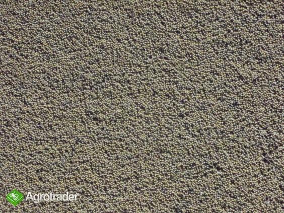 Gorczyca biała  - zdjęcie 2