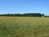 Siecie, okolice Słupska, grunt rolny, na sprzedaż, 2,25 ha, 140 000 zł