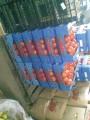 Pomidory szklarniowe BB (iportowane)