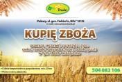 Kupię zboża paszowe i konsumpcyjne, kukurydzę, łubin, bobik, groch