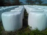 Sprzedam sianokiszonke-lucerna z trawą w balotach