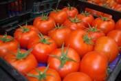 pomidory prosto z importu