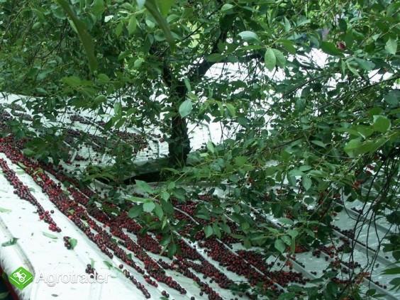 Otrząsarka do wiśni i śliw MAJA Weremczuk - zdjęcie 1