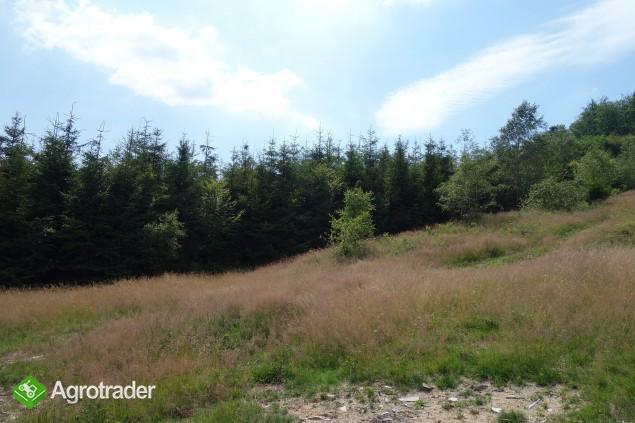 Beskidy Brenna 2,53 ha z prawem zabudowy blisko wyciągu orczykowego - zdjęcie 4