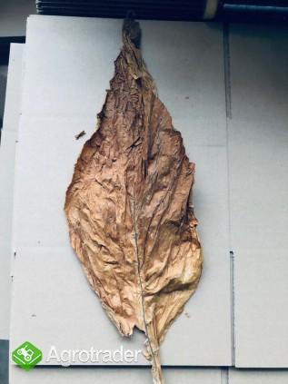 Liście tytoniu ORIENTAL VIRGINIA BURLEY - zdjęcie 2