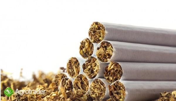 tytoń kg  65 zl kg  szybka dostawa tani lekki wydajny  736-903-355 - zdjęcie 2