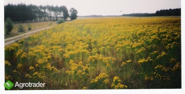 ziemia rolna na Kaszubach-działki po 3000m2 - zdjęcie 1