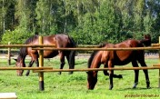 Poszukuję gospodarza/zarządcy do gospodarstwa rolnego (dolnośląskie)
