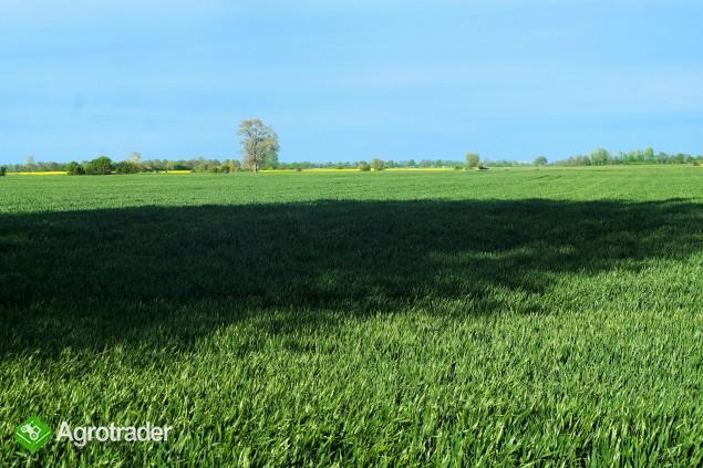 Gospodarstwo rolne gmina Suchy Dąb - zdjęcie 5