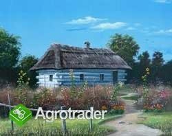 UkrainaRozneGatunkiMiodu wysokiej jakosci,12 zl/kg - zdjęcie 2