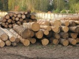 Ukraina.Drewno opalowe.Cena 15 zl/m3
