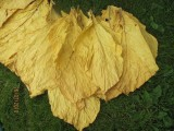 Tytoń liście tytoniu Virginia Super Jakość