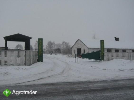 Ukraina.Gospodrstwo rolneFermaTrzody45km od Kijowa - zdjęcie 2