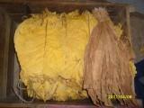 liście tytoiu Virginia i Barley