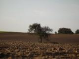 Sprzedam ziemie rolna
